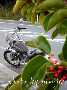 赤い実とvirago250