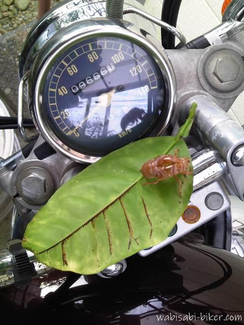 バイクメーターとセミの抜け殻