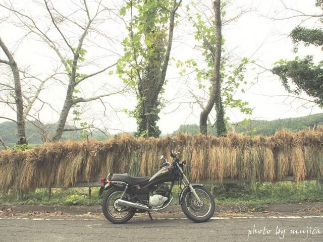 稲束とバイクのある風景