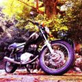 バイクでイチョウの黄葉を見に行く☆納車4週間のYAMAHA SR125