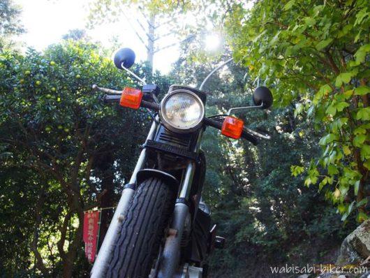 バイクとイチョウとみかんの木