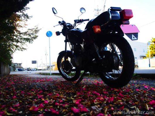 バイクとサザンカの花びら