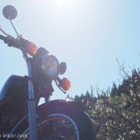 白梅とオートバイ