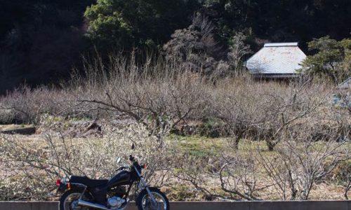 バイクと旧家と梅