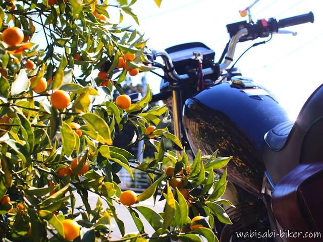 キンカンとオートバイ