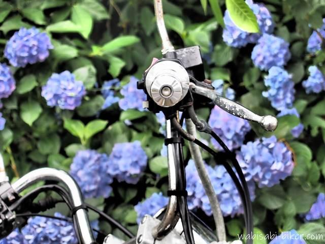 バイクのハンドルとアジサイ