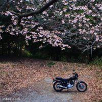 桜とバイクのある風景