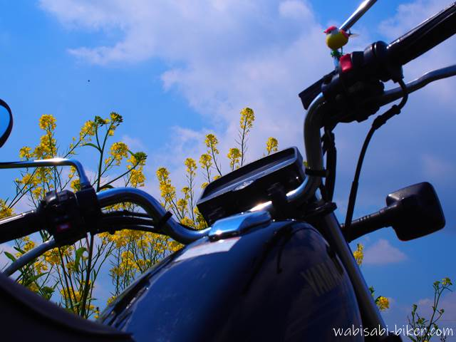 オートバイと菜の花と青空