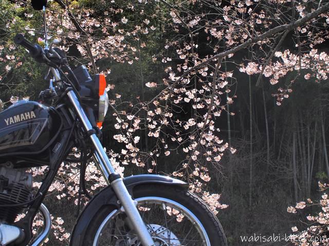 桜とオートバイ