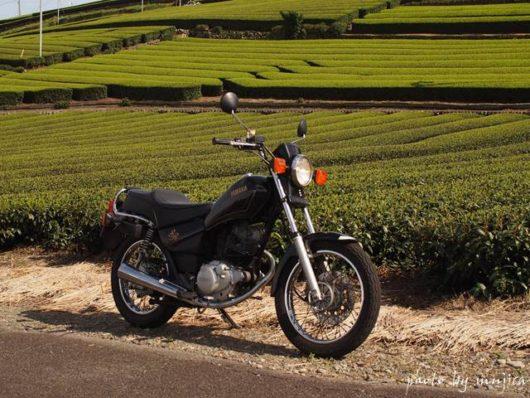 オートバイと茶畑