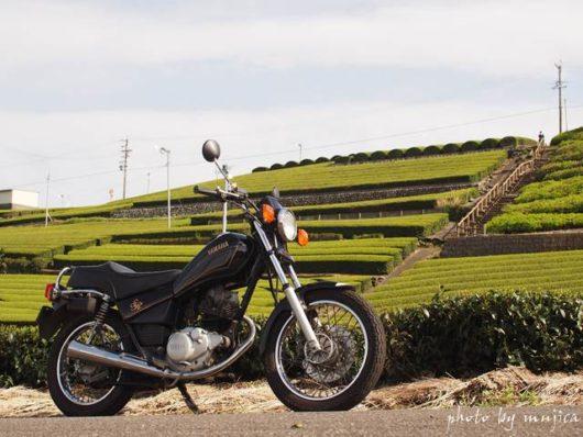 オートバイと春の茶畑