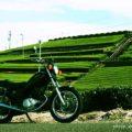 萌える茶畑と☆YAMAHA SR125