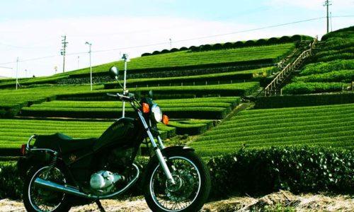茶畑とオートバイ