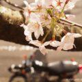 時代劇「必殺シリーズ」に憧れたバイク写真☆YAMAHA SR125