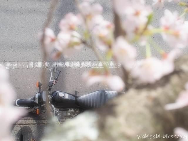 上から見たオートバイと桜