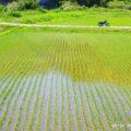 初夏の田んぼと崖を背景に記念撮影☆YAMAHA SR125
