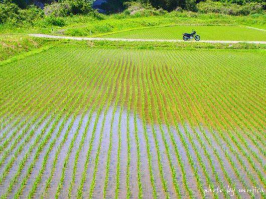 水田とバイクのある風景