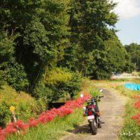 彼岸花とバイクのある風景