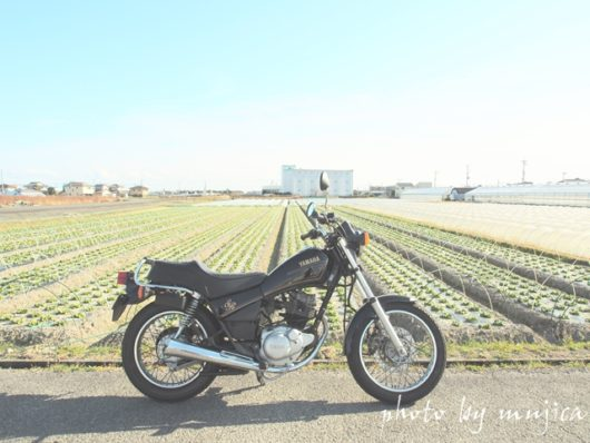 SR125とレタス畑