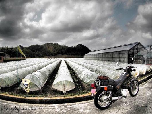 レタス畑のビニールハウスとオートバイ
