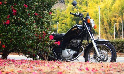 バイク写真 サザンカとオートバイ