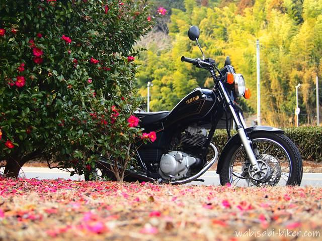 オートバイとサザンカ