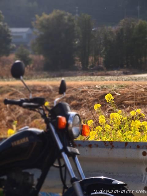 菜の花とオートバイ