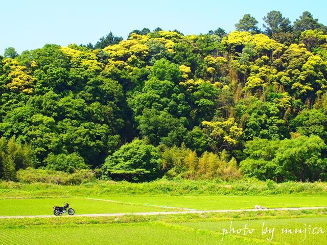 田んぼと山とバイクのある風景