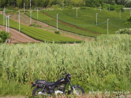 笹と茶畑とSR125