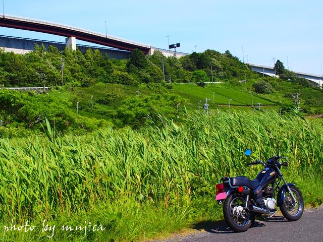 SR125と夏の緑