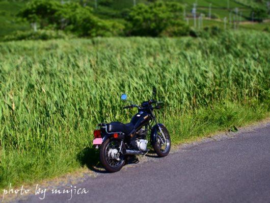 SR125と笹