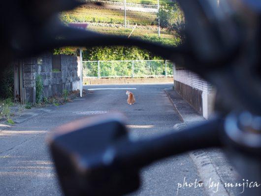 バイク越しのネコ