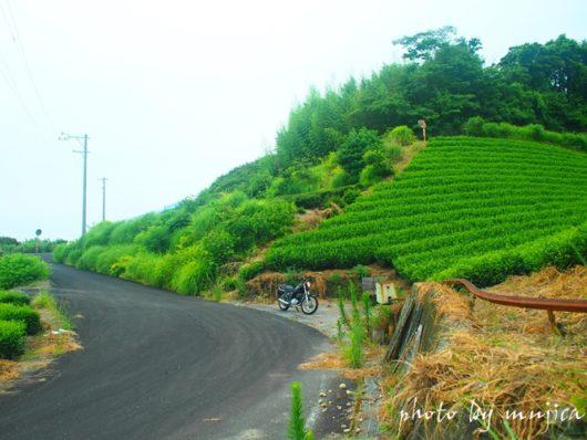 勝間田城跡への坂道