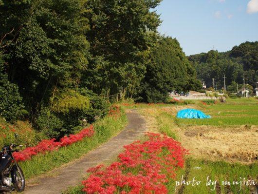 彼岸花が咲く小道とSR125