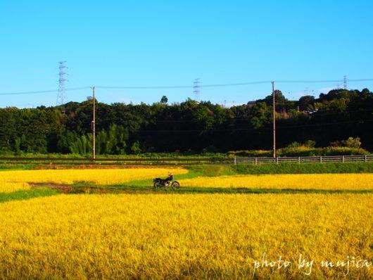 バイクと稲穂のある風景