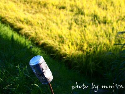 モグラよけの空き缶