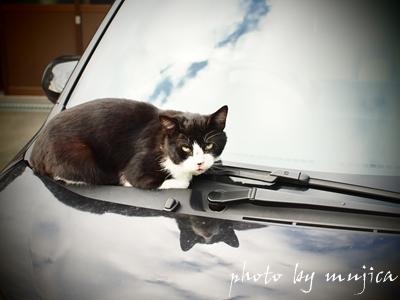 ボンネットの上で睨む猫