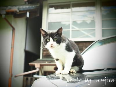 ボンネットの上で警戒するネコ