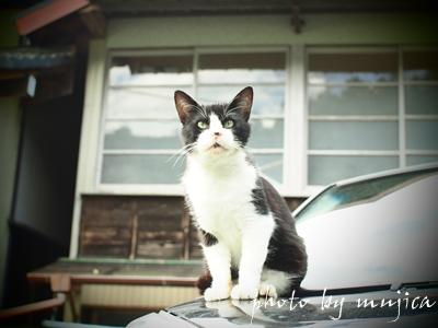 ボンネットの上に佇む猫