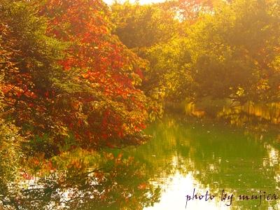 畑無の池と紅葉