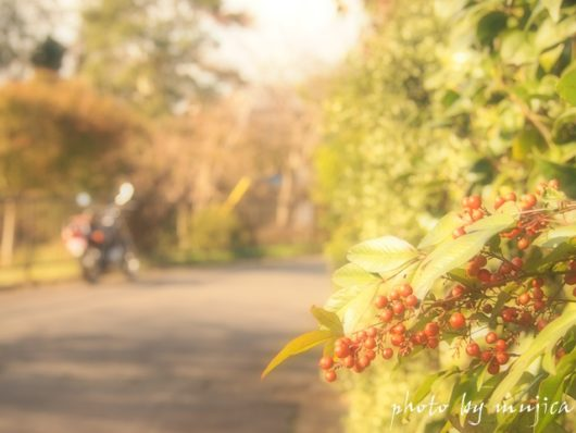 赤い実とバイクのある風景