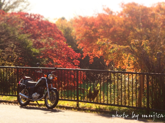 SR125と池の紅葉