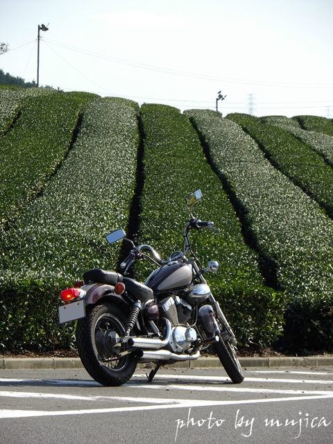 virago250とストライプ柄の茶畑