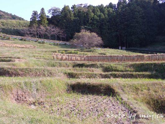 秋の千框の棚田