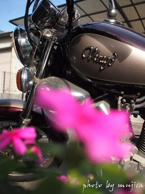 花越しのvirago250
