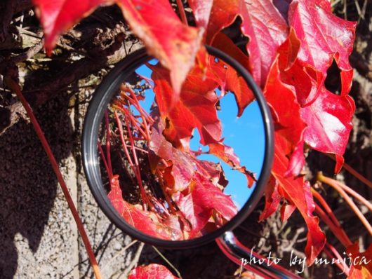 バイクミラーに映った紅葉