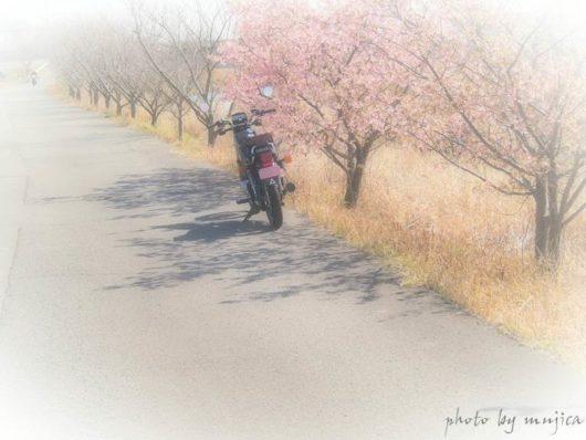 土手沿いの桜とオートバイ