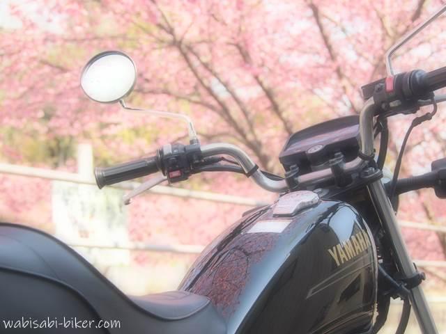 バイクと掛川桜