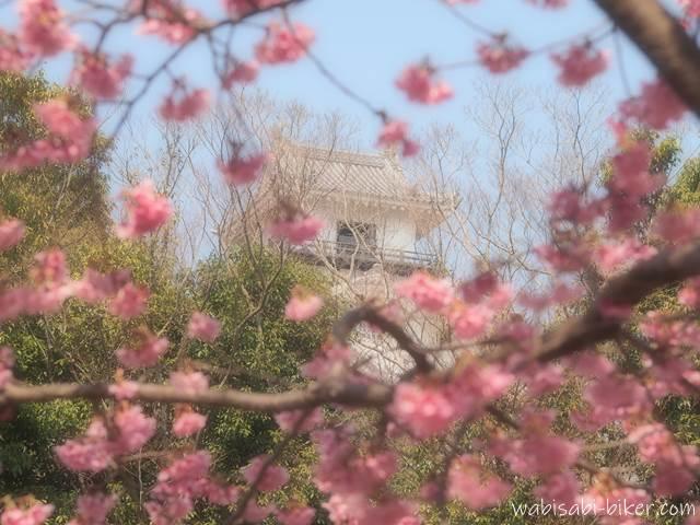 掛川桜と掛川城