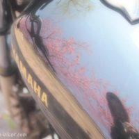 バイクのタンクに映り込んだ桜と自撮り